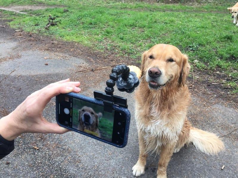 Selfie pour animaux